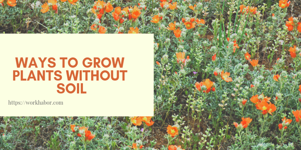 Ways To Grow Plants Without Soil