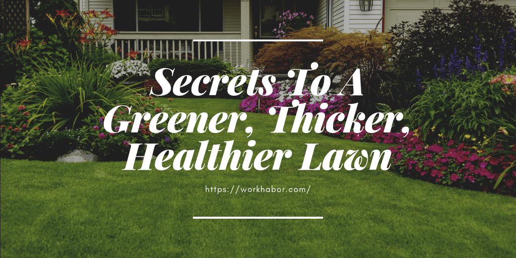Lawn Care Tips For A Greener, Thicker, Healthier Lawn