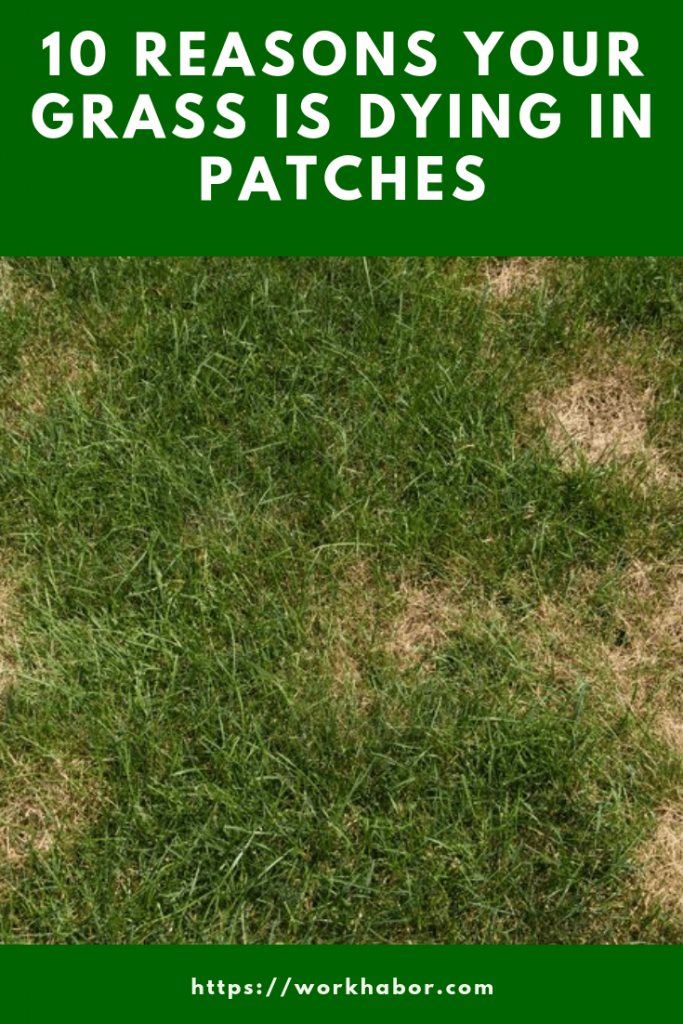 10 reasons your grass is dying in patches