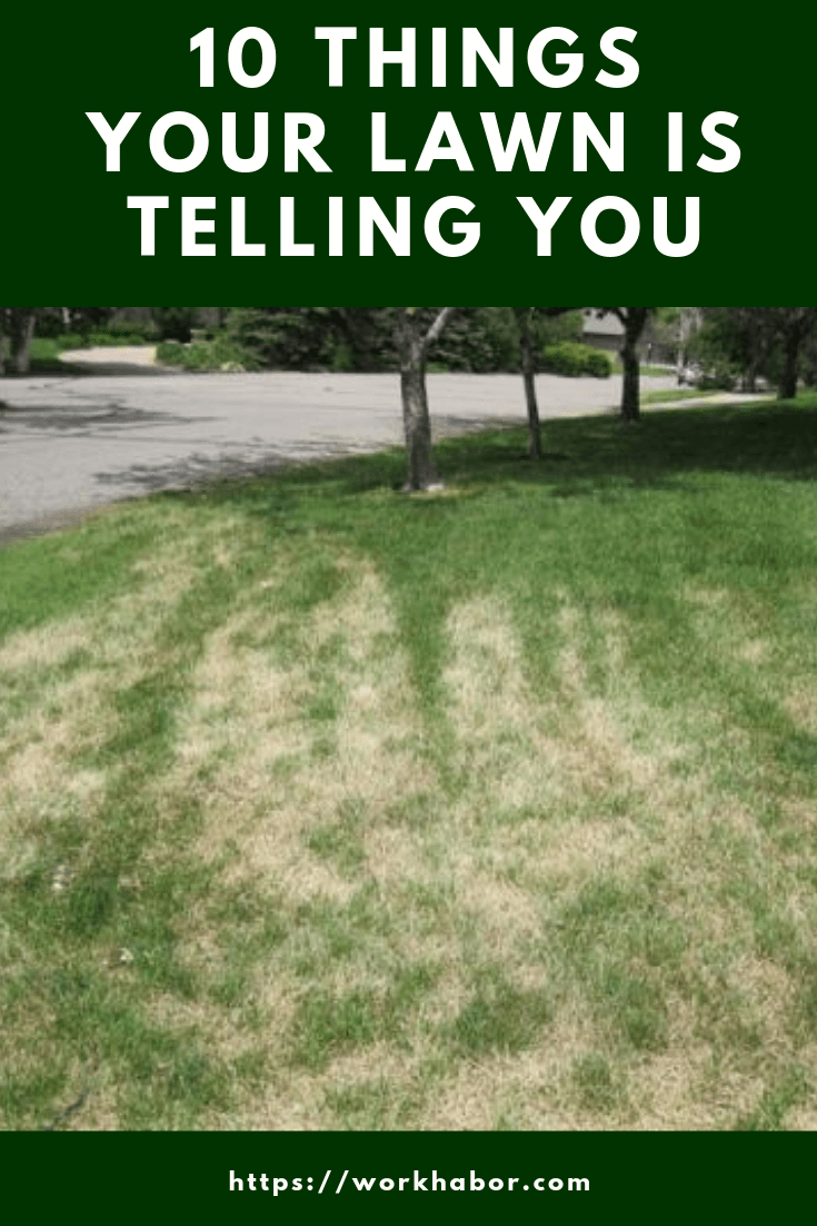things your lawn is trying to tell you